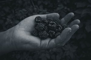 Hand Full of Blackberries