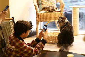 teenager boy in cat cafe make photo
