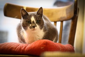 cute funny cat sit on pillow chair