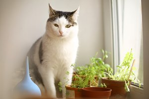 cat eating pot plants sprouts on win