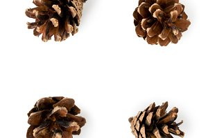 Set of four pine cones on a white ba