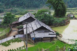Old houses among rice paddies