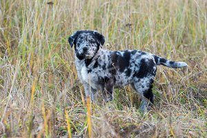 Cute Labrador puppy dog with