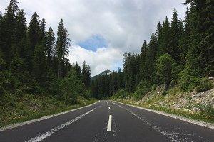 Forest Road on Pokljuka forest