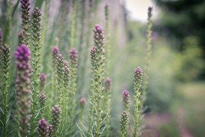 Meadow blur