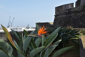 Bird of Paradise on the seafront