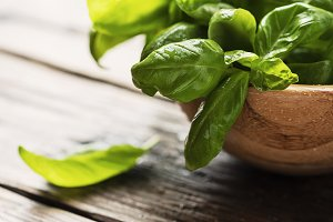 Green fresh basil