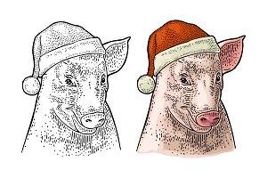 Pig head in Santa Claus hat. Vector