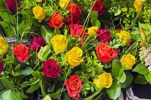 Beautiful multi-colored roses.