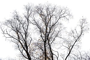 Tree branches isolated on the white
