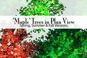 36 'Maple' Trees in Plan View