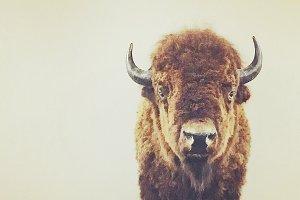 Rustic Minimalist Buffalo Photo
