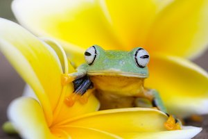 tree frogs and yellow flowers
