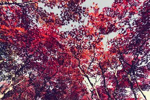 Autumn season colorful of leaves in