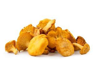 A bunch of chanterelles mushrooms