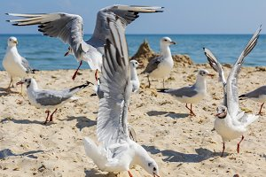 sea gulls on the beach