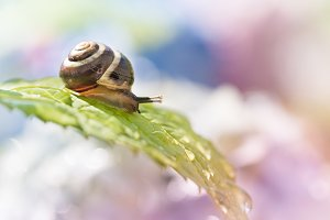 Dreamy snail