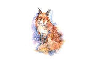Winter portrait of red fox
