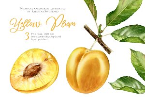 Yellow Plum. Watercolor fruits