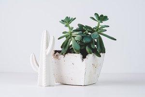 Succulent Plant Home Decor