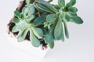Green Succulent Home Decor