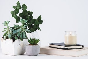 Styled Plants & Home Decor