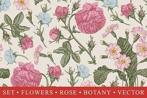 Set Seamless Flowers Rose Botany
