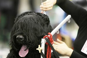 Dog at hairdressing saloon