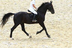 Runing dressage horse