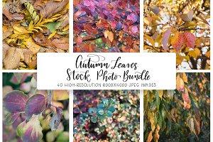 Autumn Leaves Stock Photo Bundle