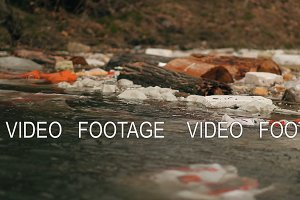 Garbage floats in the water near the
