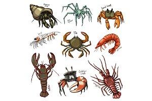 Crustacean vector crab prawns ocean