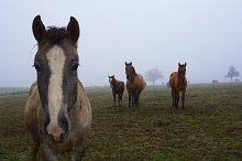 autumn horses by  in Animals