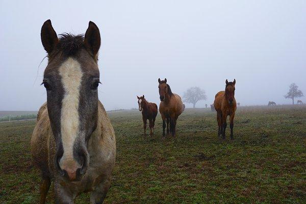 Animal Stock Photos: ateliervonau - autumn horses