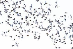beautiful birds fly in the sky