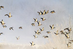 birds fly in the winter frosty