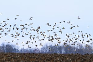 birds fly quickly over the winter