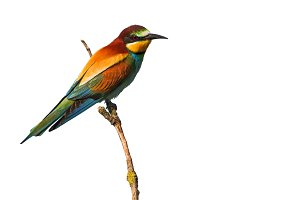 Colorful beautiful bird on a branch
