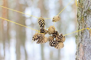 pine cones tied to threads in the