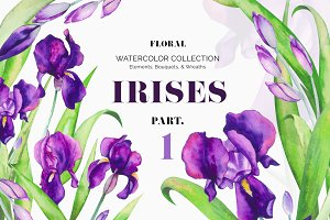 Irises. Watercolor Floral Collection