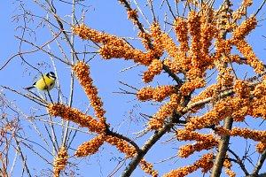 yellow bird sits near the orange