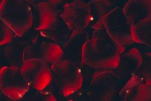 beautiful red rose petals floral bac