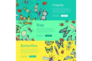 Vector hand drawn insects of set