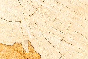 Cracks in circular wood cut surface