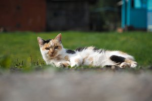 The cat is lying in the green grass