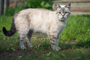Portrait of a strange cat. The cat