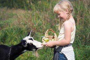 Funny cute baby feeding a goat. Girl