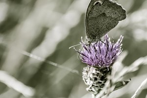 Butterfly on flower, space for text