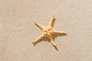 top view of dry starfish lying on sa