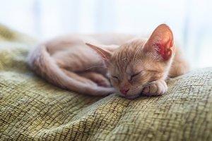 Tabby orange kitten sleeping